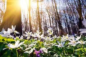 Moda Primavera-Verano